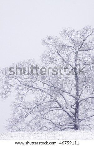 Oak tree in snow after Mississippi Blizzard - stock photo