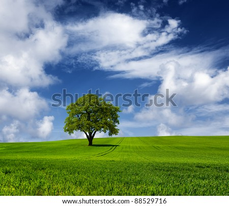 Oak tree on a cloudy day - stock photo
