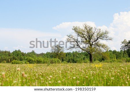 Oak tree on a meadow with grass. Ecology concept panorama with blue sky background . Ukraine - stock photo