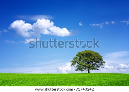 Oak tree on green field - stock photo