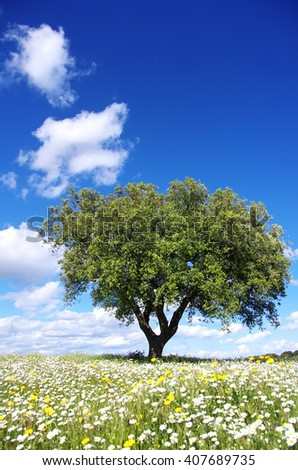 Oak tree on spring at Portugal - stock photo