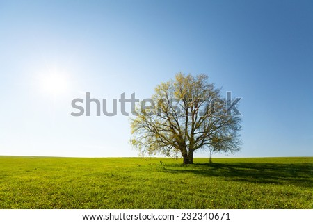Oak tree on the green spring meadow - stock photo