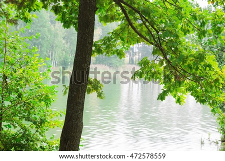 oak tree on the shore of a forest lake