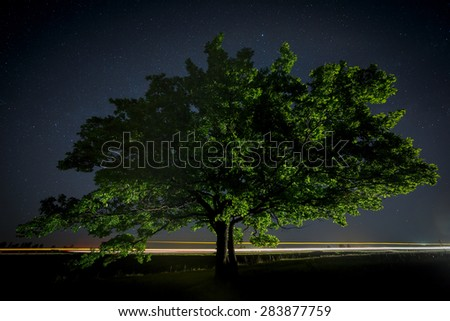 Oak tree with green leaves on a background of the night sky and the Milky Way.