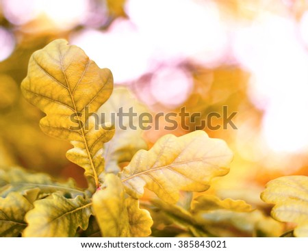 Oak tree with selective focus of the foreground and bright sun with smooth light. Nature background in autumn with copy space and red leaves. - stock photo
