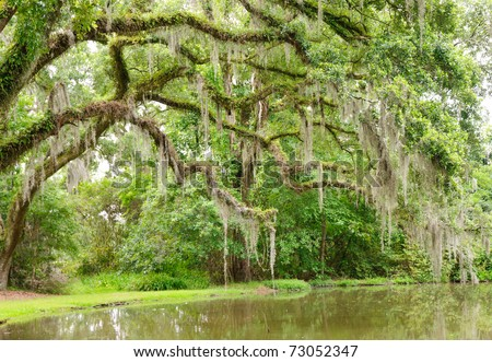 oak trees and spanish moss over a pond - stock photo
