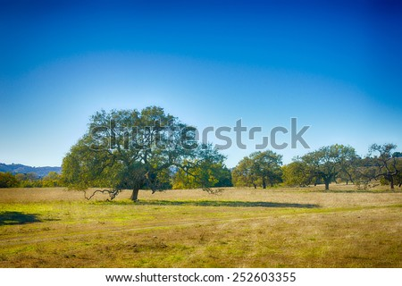 Oak trees fill meadow in Central California ranch land. - stock photo