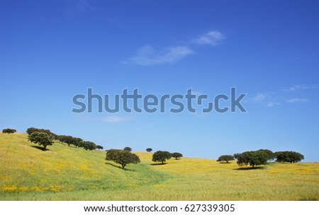 Oak trees in springtime field, Alentejo, Portugal