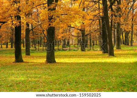 Oak trees with bright autumn leaves in the park. - stock photo