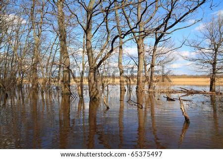 oak wood in water - stock photo