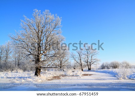 oak wood near freeze river - stock photo