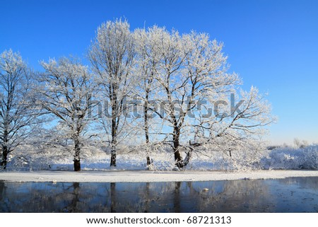 oak wood on coast river - stock photo