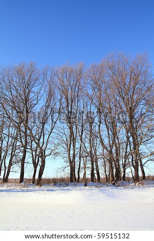 oak wood on snow coast river - stock photo