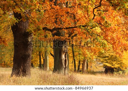 Oaks in fall foliage in a park in Hamburg, Germany, autumn landscape with trees