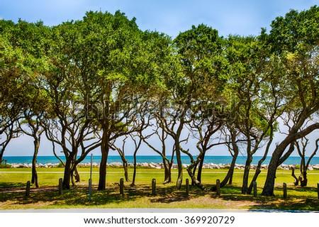 Oaks line the shore at Fort Fisher museum near Kure Beach, North Carolina. - stock photo