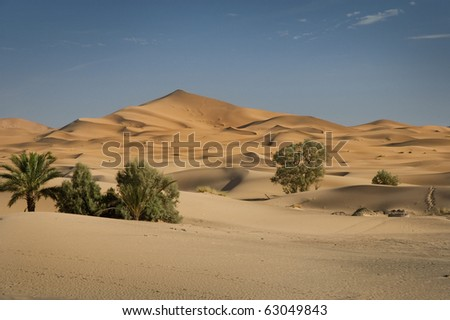 Oase in der W�¼ste, Marokko, Sahara - stock photo