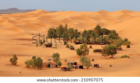 Oasis in Sahara desert - stock photo