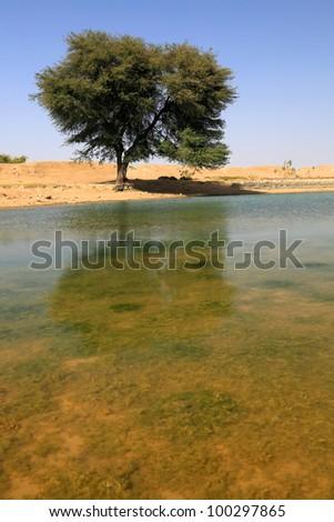 Oasis in Thar Desert, India, Asia - stock photo