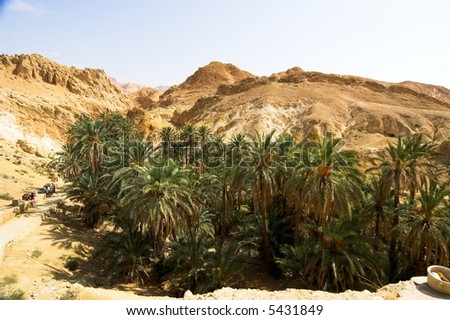 Oasis in Tunisia - stock photo