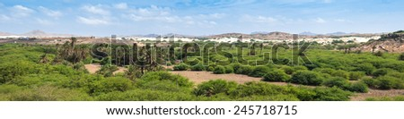 Oasis near  Viana desert, Boavista - Cape Verde - stock photo