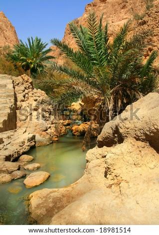 oasis tozeur in tunisia - stock photo