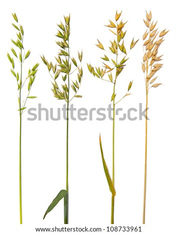 Oat collection - stock photo