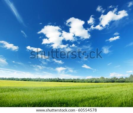 oat field and sunny sky - stock photo