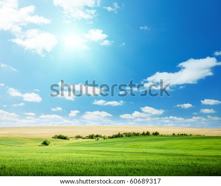 oat field and sunny sky - stock photo