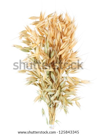 Oat isolated on a  white background