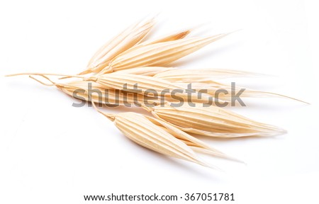 Oat plant isolated on a white background. - stock photo