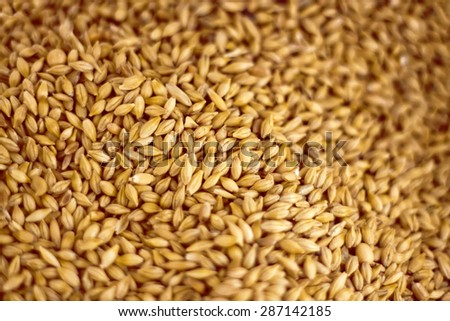 Oat seeds background, shallow field of view