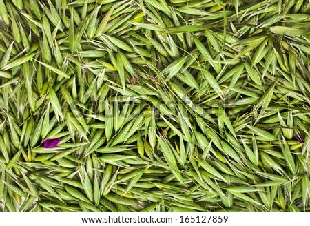 oat seeds top view surface texture close up background  - stock photo