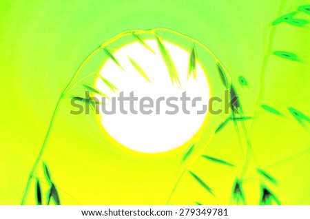 Oat twig at sunrise, saturated image with green tones and yellow - stock photo