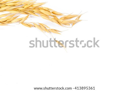 oats cereal grain on white background