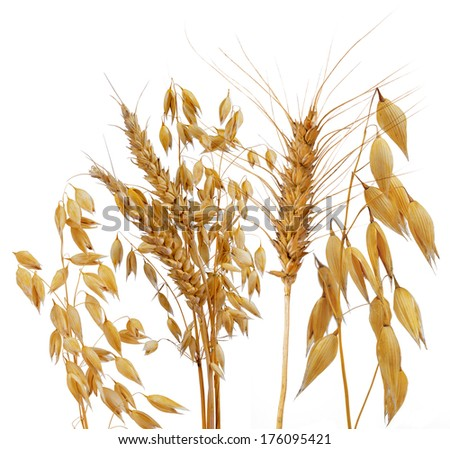 Oats, rye and wheat isolated on white