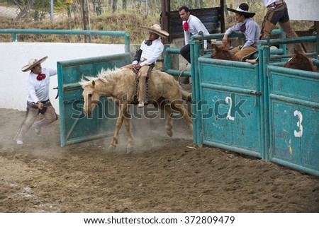 "OAXACA, MEXICO. DECEMBER 20, 2015. Charreria Mexican National Sport. a man is riding a wild horse, ""Jineteo de Yegua"""