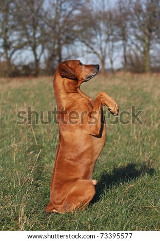 obedient dog - stock photo