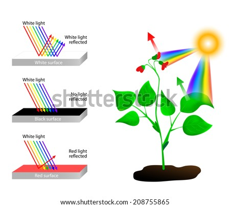 Objects look coloured because they reflect or absorb the different colours in white light. white it reflects all the wavelengths. A black absorbs all  wavelengths of light and reflects none. - stock photo