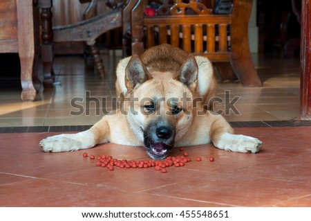 Occasionally, the dog is unwilling to eat. In these cases, it may be lazy or doesn't like food, selective focus, Akita japan dog.
