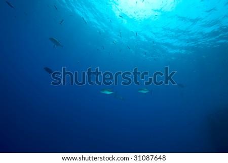 ocean and fish - stock photo