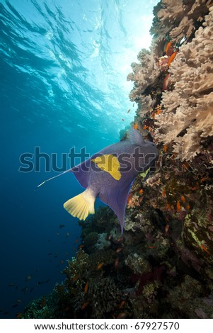 Ocean and fish in the Red Sea. - stock photo