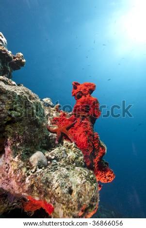 ocean and starfish - stock photo