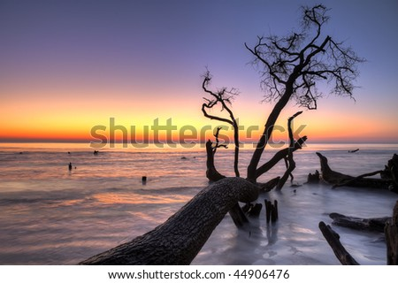 ocean at twilight with fallen tree, hdr image - stock photo