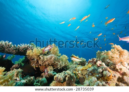 ocean, coral and fish - stock photo