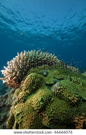 ocean, coral and fish. - stock photo
