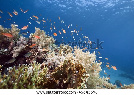 ocean, coral and fish taken in the Red Sea - stock photo