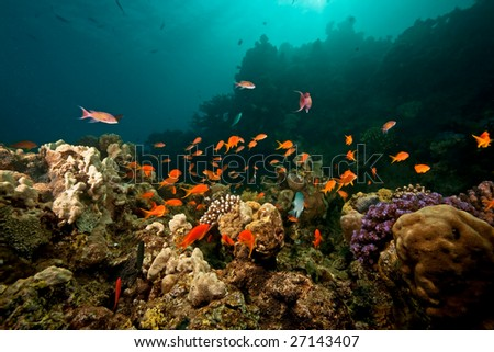 ocean, coral, sun and fish - stock photo