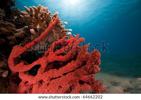 Ocean,fish and coral taken in the Red Sea. - stock photo