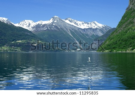 Ocean fjord in Norway, flying seagulls, green mountains - stock photo