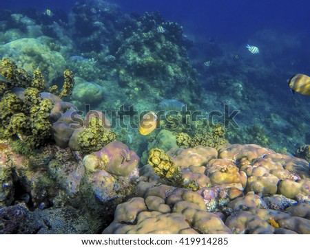 Ocean landscape, coral reef with tropical fishes, coral fishes, reef fishes, coral reef life, sea life, sea animals, summer holiday activity, snorkeling in coral reef, clean sea with fishes - stock photo